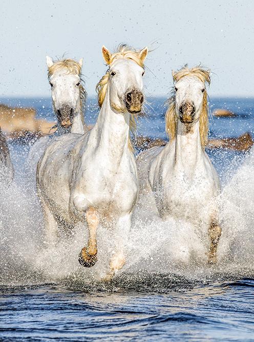 chevaux-camargue-mas-de-letoile
